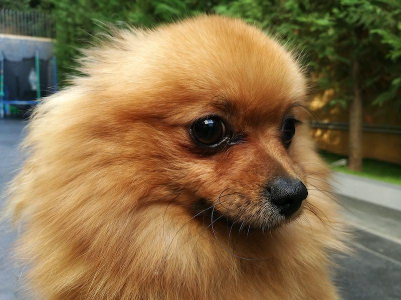 Huawei P9 Details Dog