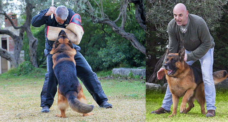 Risco German Shephard Training
