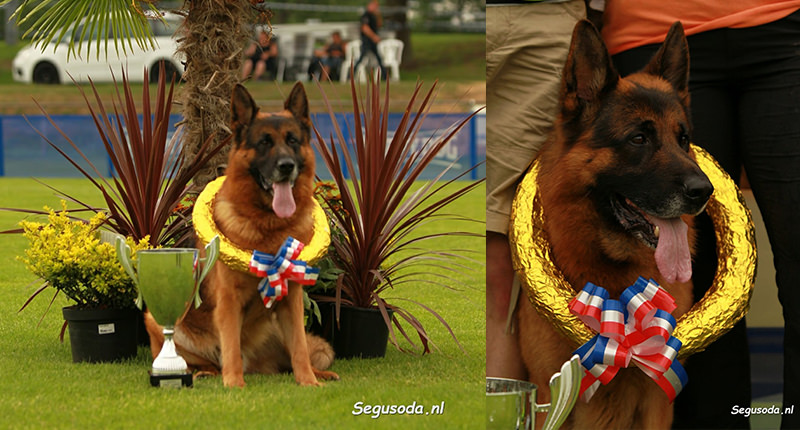 Risco German Shephard Winner